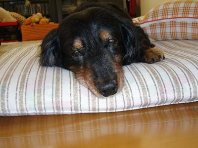 ダクオの寝顔
