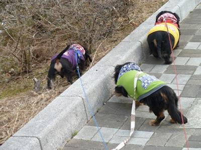 3ワン散歩