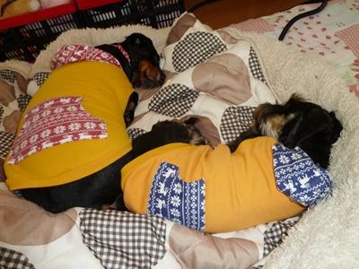 寝チャッピーとニコル