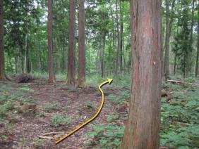 ②お宮の森11