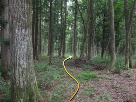 ②お宮の森10