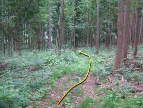 ②お宮の森15