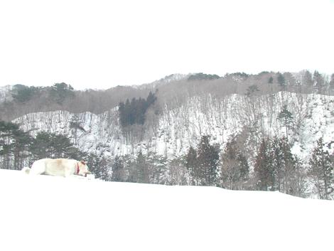2011_3_20