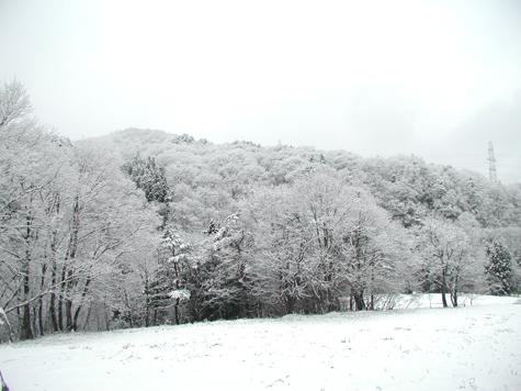 2011_4_20