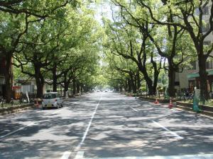 宮崎県庁 5
