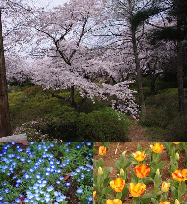 清水公園の花