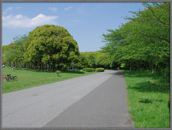 水元公園散歩1