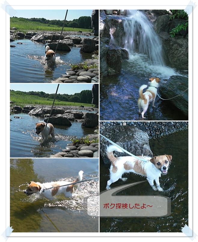 水元20100718-3