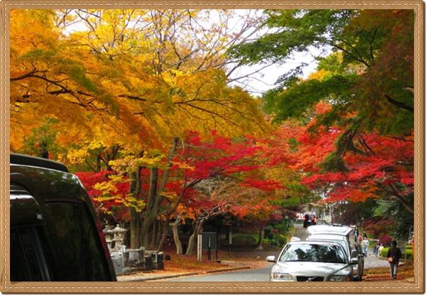 八柱霊園の紅葉1
