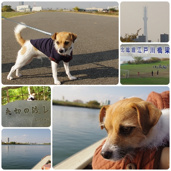 江戸川-矢切の渡し
