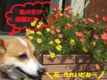 001_convert_20100920035102.jpg