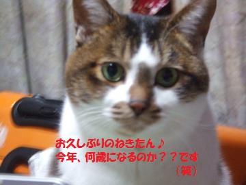 001_convert_20110107012528.jpg