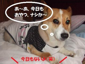002_convert_20100710002336.jpg