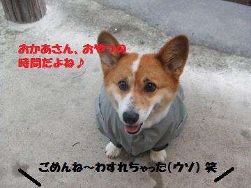 002_convert_20100711232905.jpg