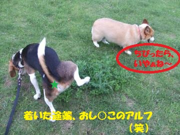 003_convert_20100809004629.jpg