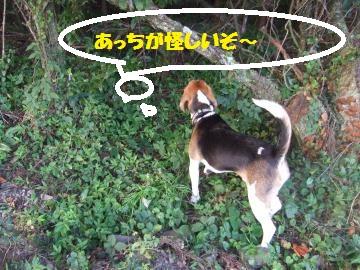 004_convert_20100729232950.jpg
