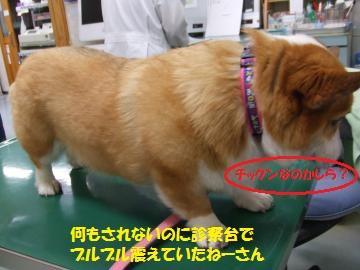 005_convert_20110130030614.jpg