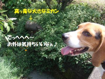 008_convert_20100920042842.jpg