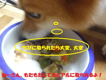 009_convert_20100805231900.jpg