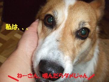 011_convert_20101028233815.jpg