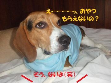 012_convert_20100710002739.jpg