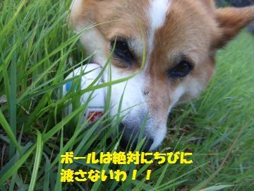 012_convert_20100728001320.jpg