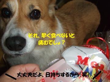 012_convert_20101210000943.jpg