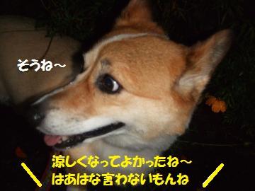 013_convert_20100930235605.jpg
