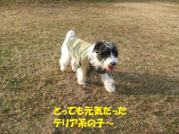 013_convert_20101208044822.jpg