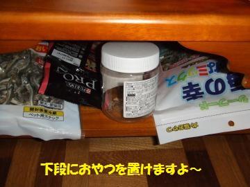 013_convert_20110118235832.jpg