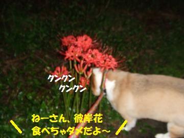 014_convert_20100930235519.jpg