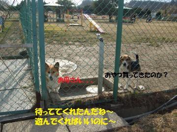 015_convert_20110124003133.jpg