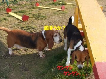 015_convert_20110201003313.jpg