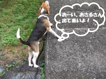 017_convert_20100809005731.jpg