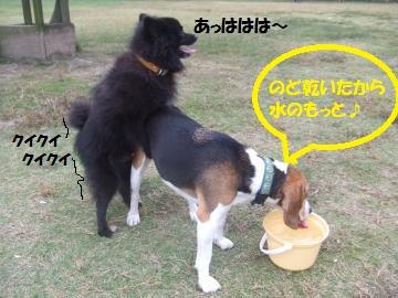 017_convert_20101025232422.jpg