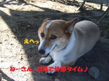 019_convert_20100718232920.jpg
