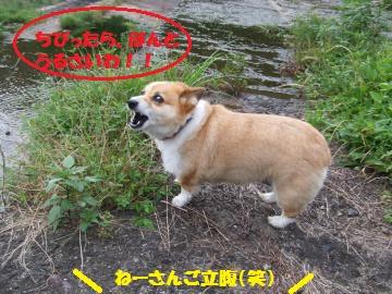 019_convert_20100809004820.jpg