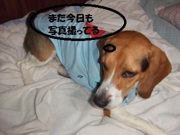 021_convert_20100710002456.jpg