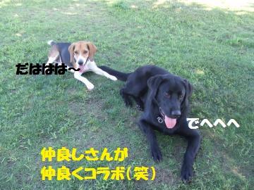 023_convert_20100718230702.jpg