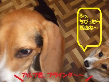 023_convert_20101108003111.jpg
