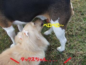027_convert_20101022005601.jpg