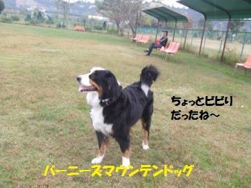 027_convert_20101025233855.jpg