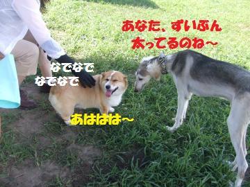 028_convert_20100810023931.jpg