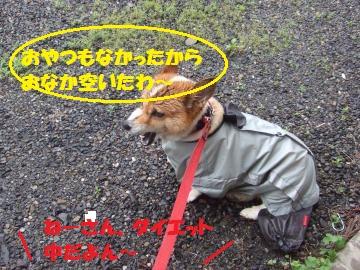 032_convert_20100711233215.jpg