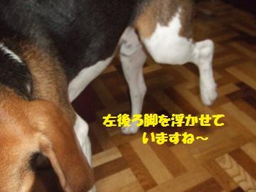 036_convert_20100711233453.jpg