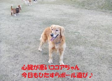 036_convert_20110201004358.jpg