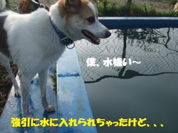 037_convert_20100804011719.jpg