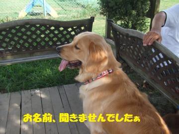 037_convert_20100810024215.jpg