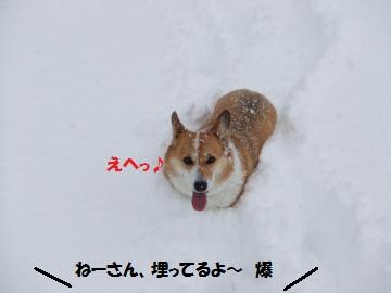 037_convert_20110116234231.jpg