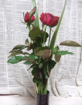 040_convert_20100720021435.jpg
